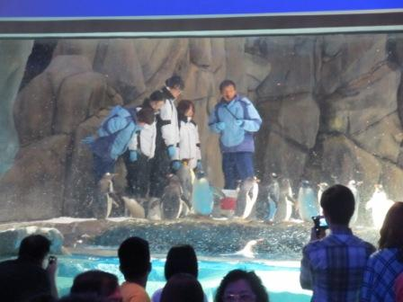 Close contact with the ocean animals...Yes, you can do it in one of the World's Best Theme Park, Ocean Park Hong Kong.  Those 2 people in blue are the trainers.  Those in white are visitors paid several thousand Hong Kong dollar to get this close to these animals.