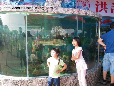 A huge fish tank at the entrance of a Sai Kung seafood restaurant.  Fish in the tank are all edible and very pricy.