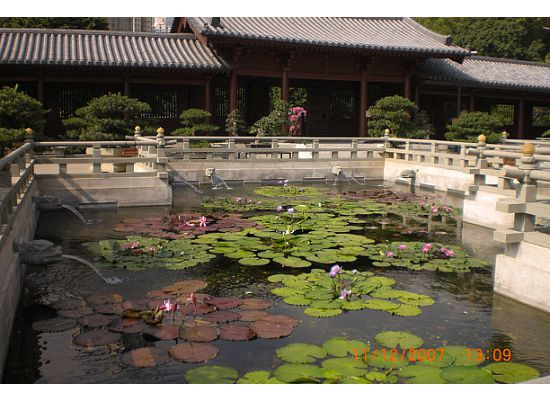 Pond of Water Lily in Chi Lin Nunnery