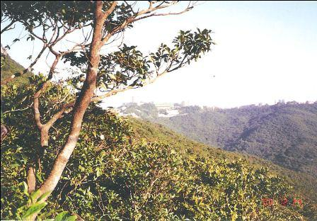 Hong Kong Peak, Lugard Road