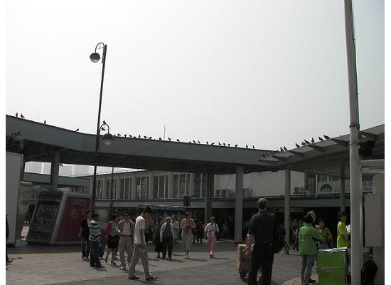 Hong Kong Star Ferry Tsim Sha Tsui Pie