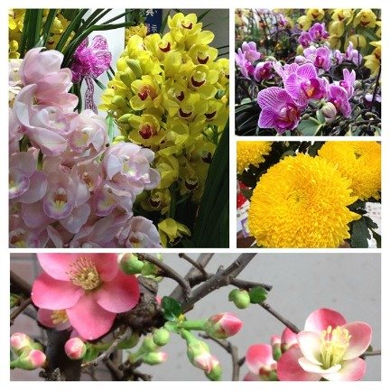 Some popular Chinese New Year flowers you can easily find in the Flea Market or Flower Market in Mongkok
