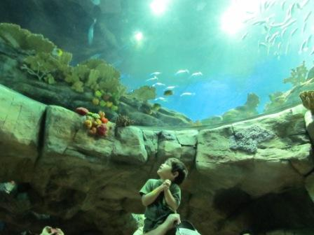 The child is in awe to see all of these ocean creatures.  Can you imagine that expression on your child's face?